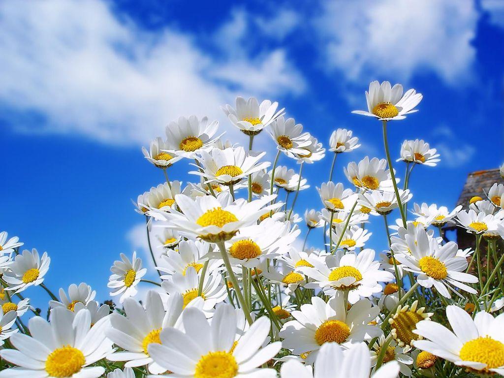 flores-brancas-na-primavera